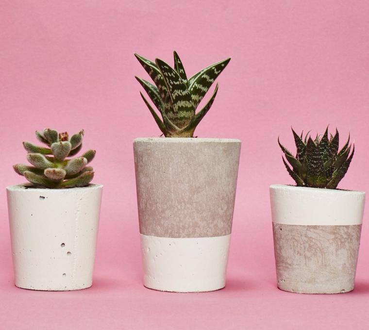 plantes d'intérieur-cactus