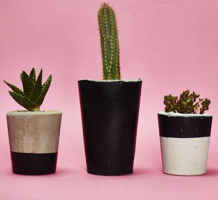 types de plantes-intérieurs-cactus