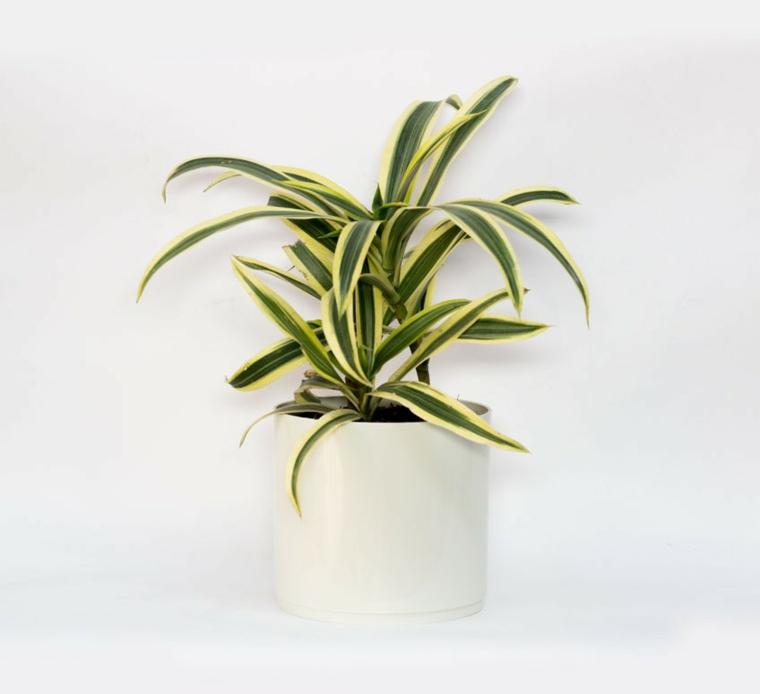 plantes pour rubans resistants au bureau
