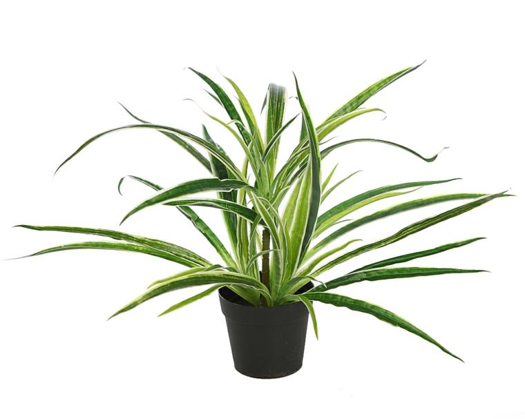 types de rubans résistants aux plantes