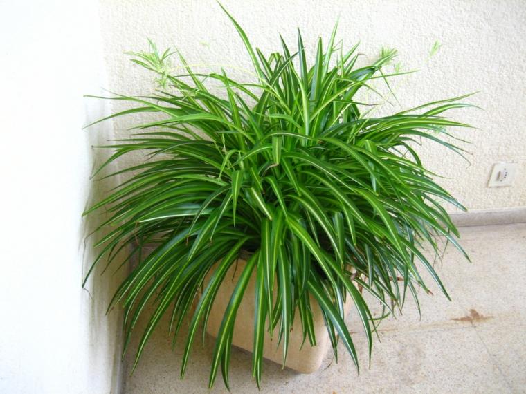 rubans-plantes résistants à l'intérieur