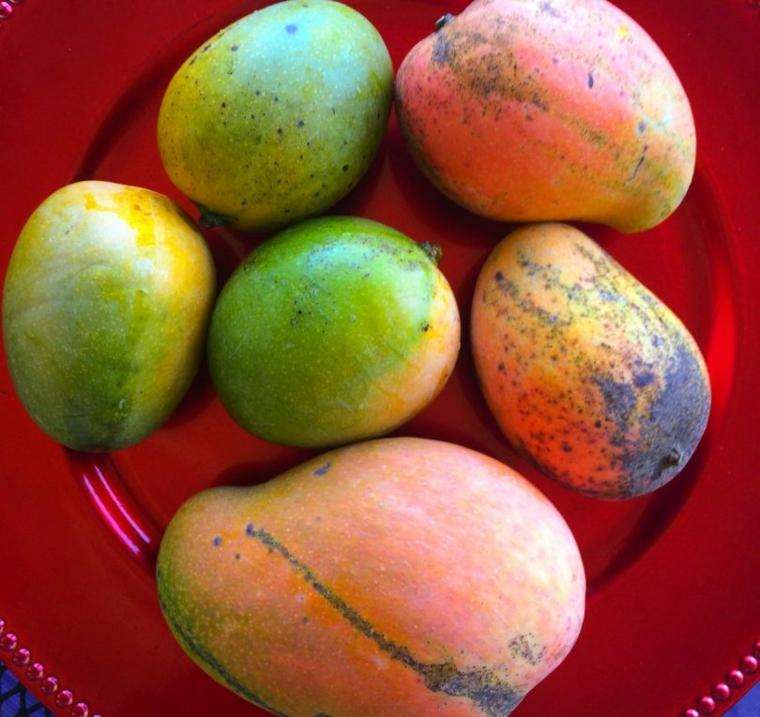 mangues de fruits