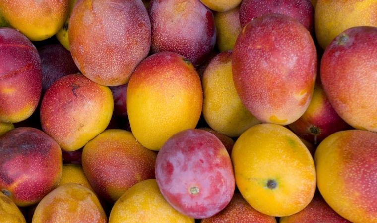 avantages ingérer de la mangue