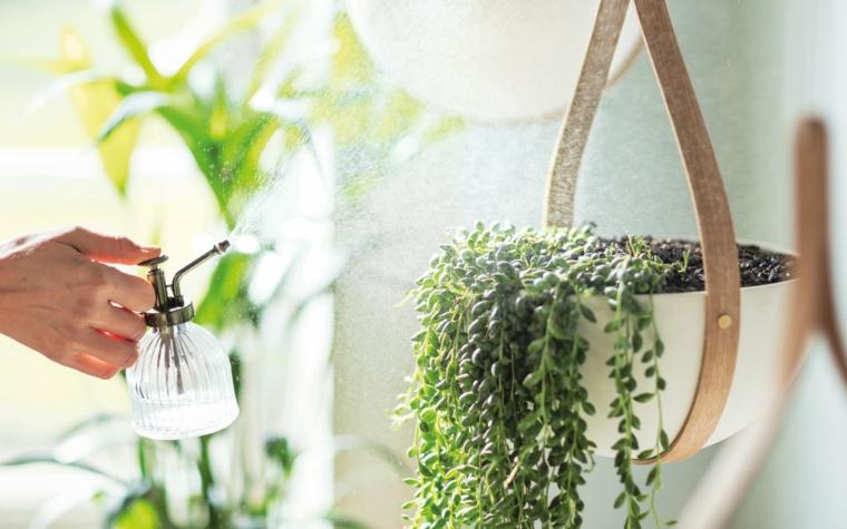 idées-irrigation-interieur-decoration