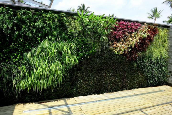 style-mur-differentes-plantes