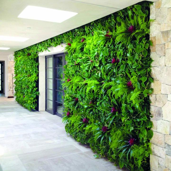 fleurs-murs-verts-mur