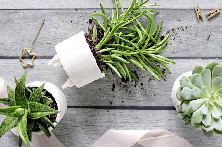 plantes succulentes-plantes-originales