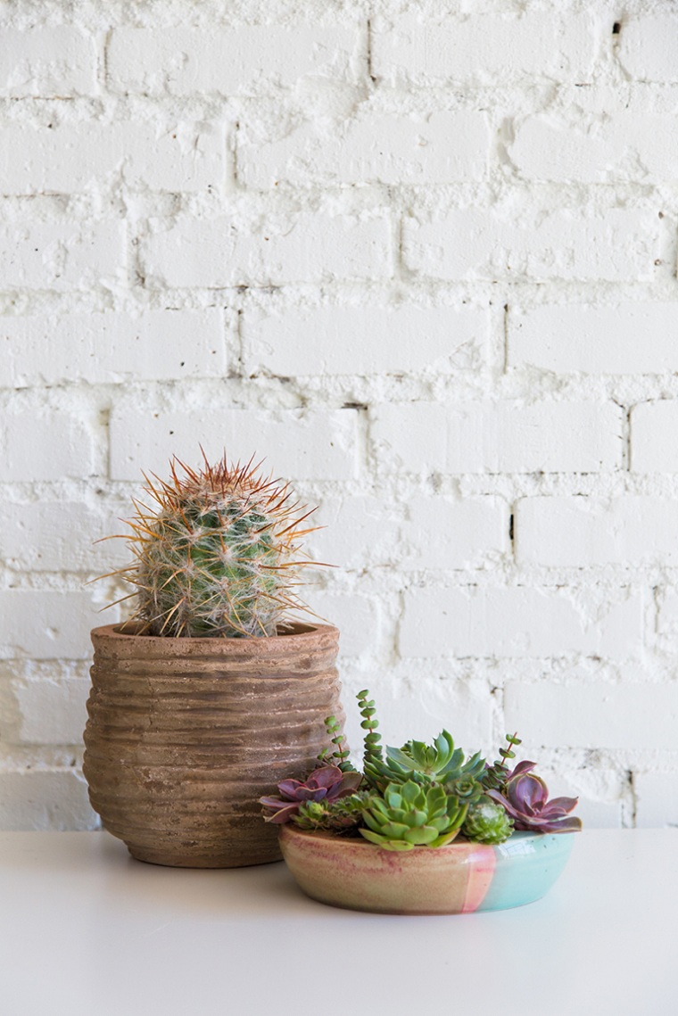 succulentes-plantes-décorer-table