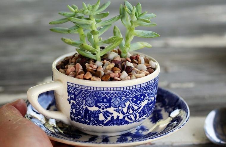 tasses-café-succulentes-tutoriel-idées