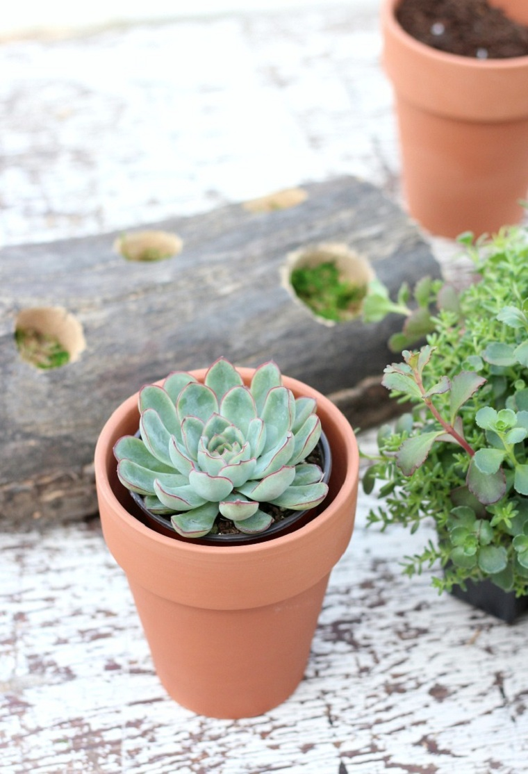 plantes succulentes-plantes-projet-idees-decoration-pretty
