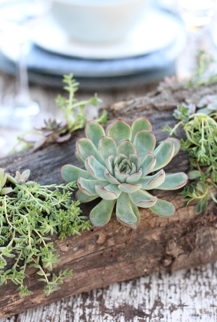 plantes succulentes-projet-idees-decoration-