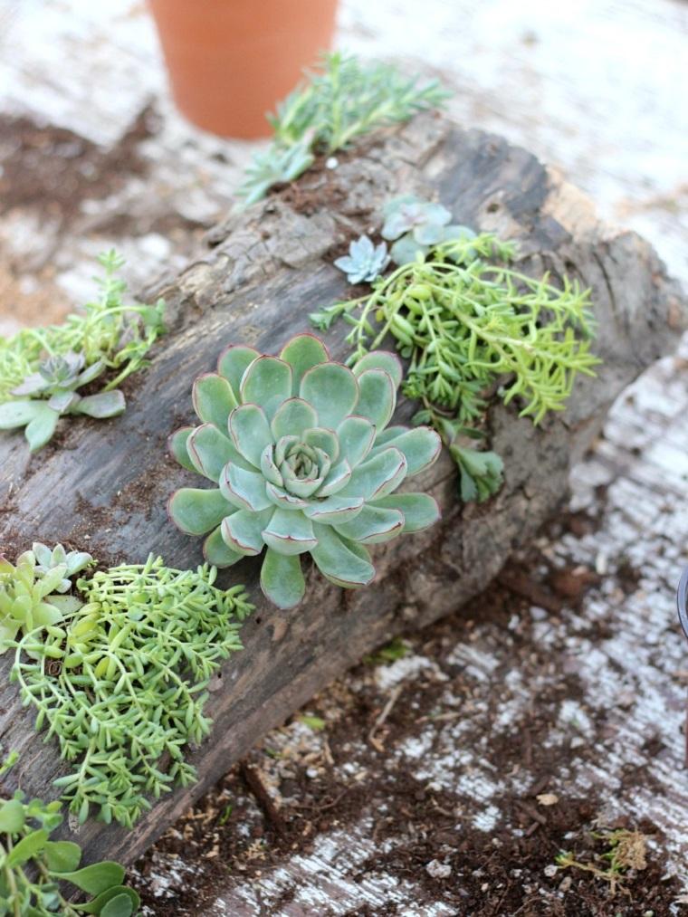 plantes succulentes-projets-idees-decoration-rustique