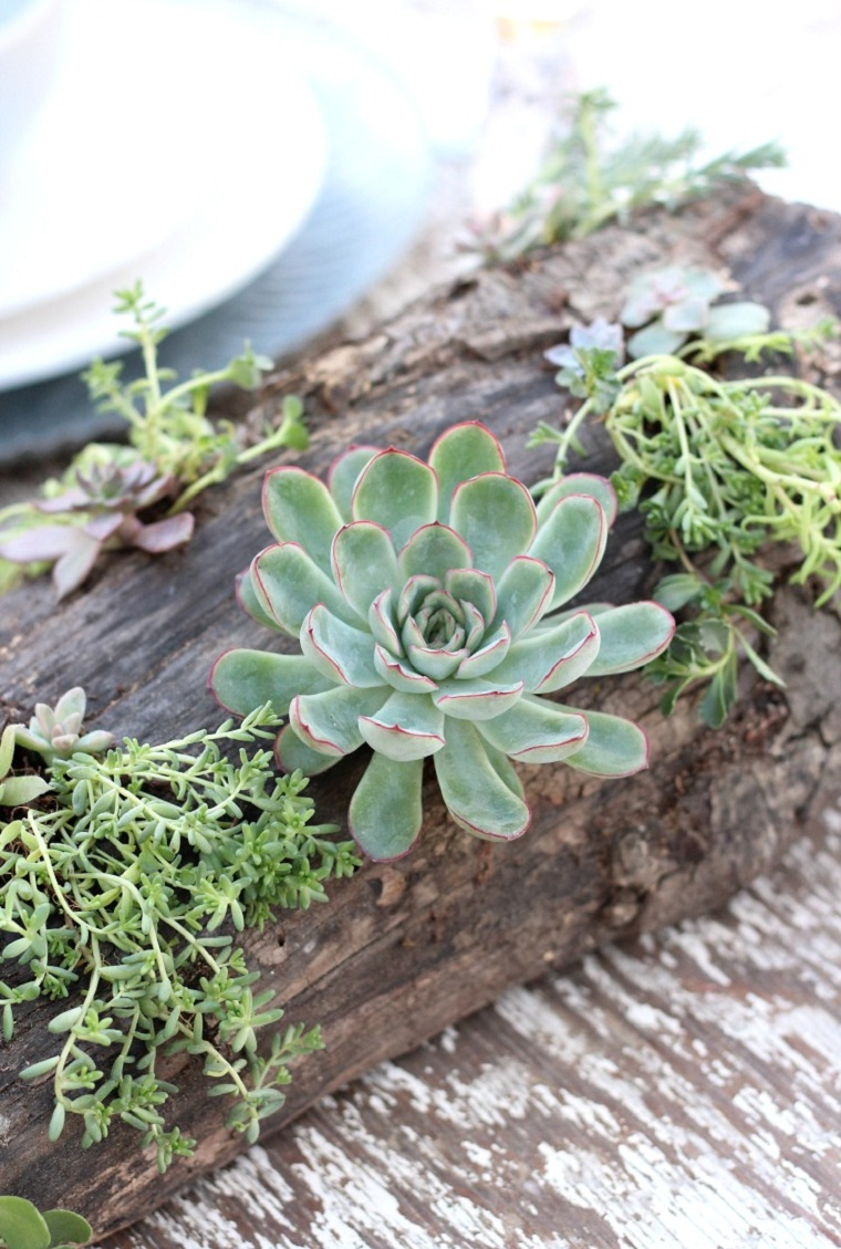 plantes succulentes-plantes-projets-idees-decorer-table