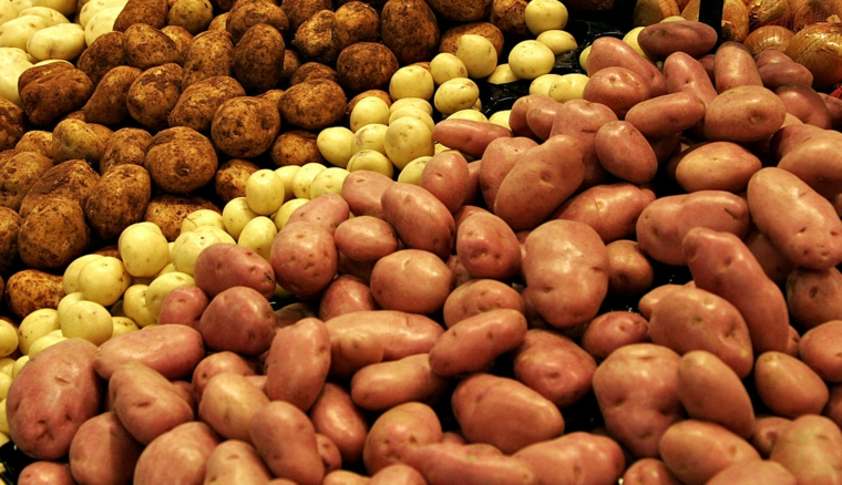 types de pommes de terre
