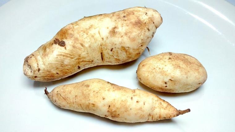 Pommes de terre à teneur en vitamines