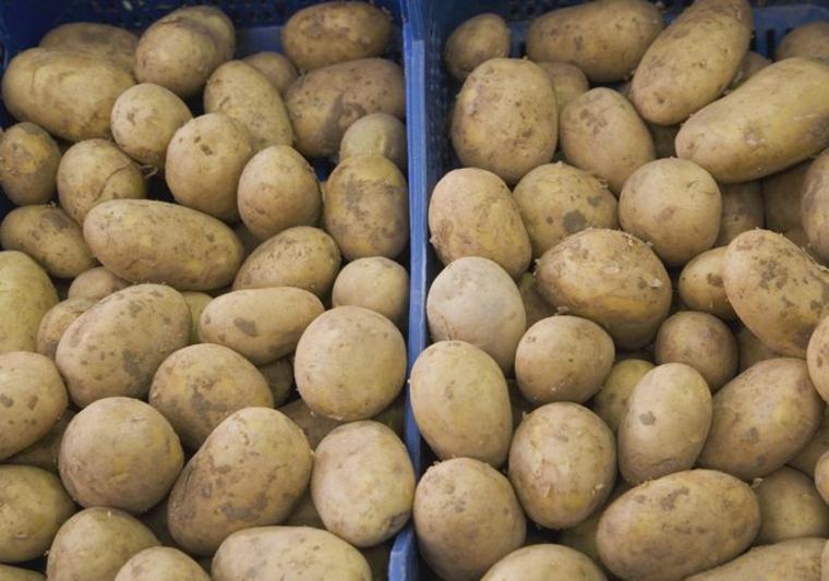 vieilles pommes de terre