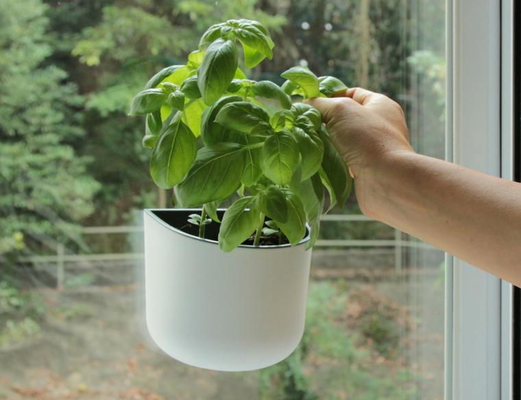 pot de fleurs-de-basilic-sur-la-terrasse