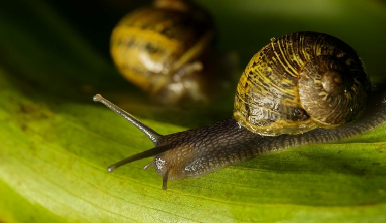 escargots-dans-feuilles-verts