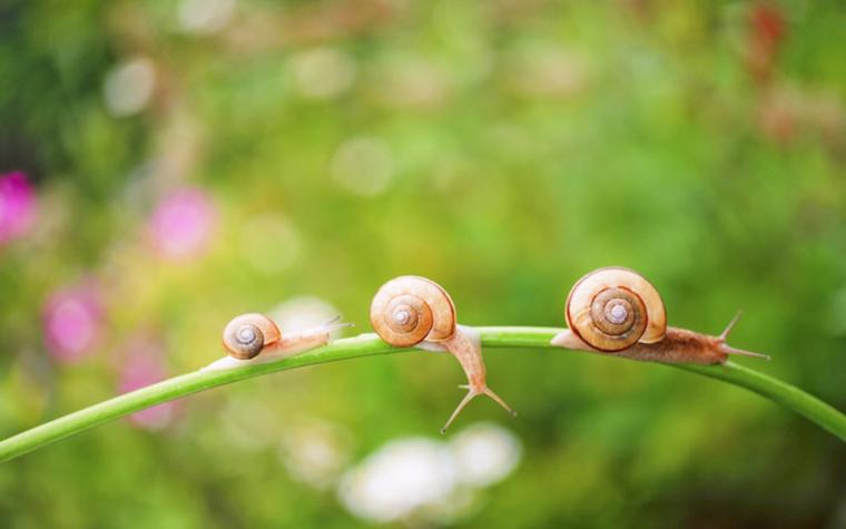 trois escargots sur un tronc